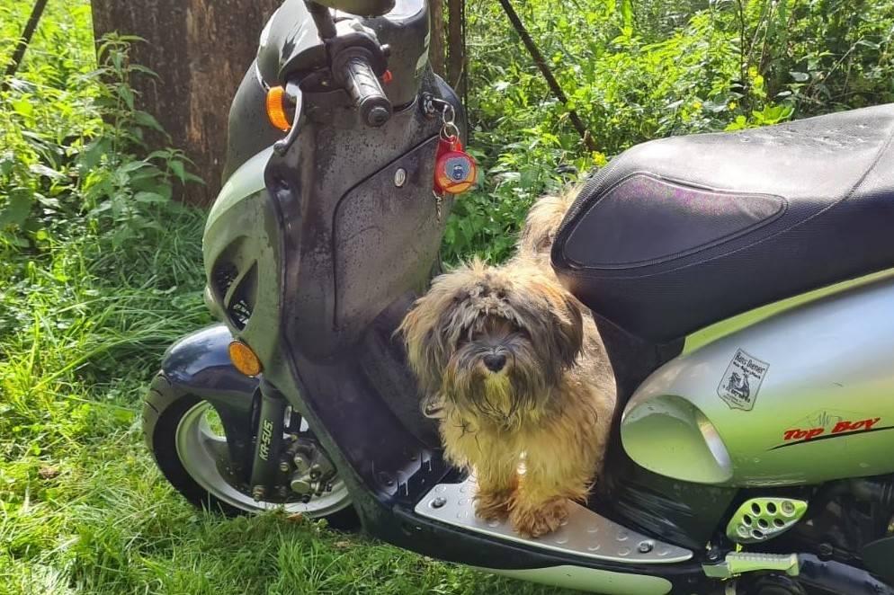 Hund auf Roller