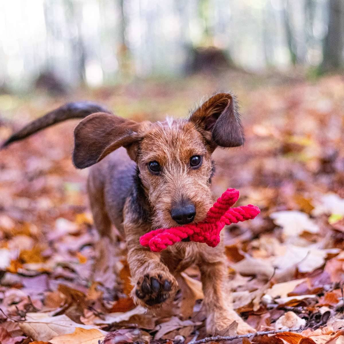 Hund im Wald (3b)
