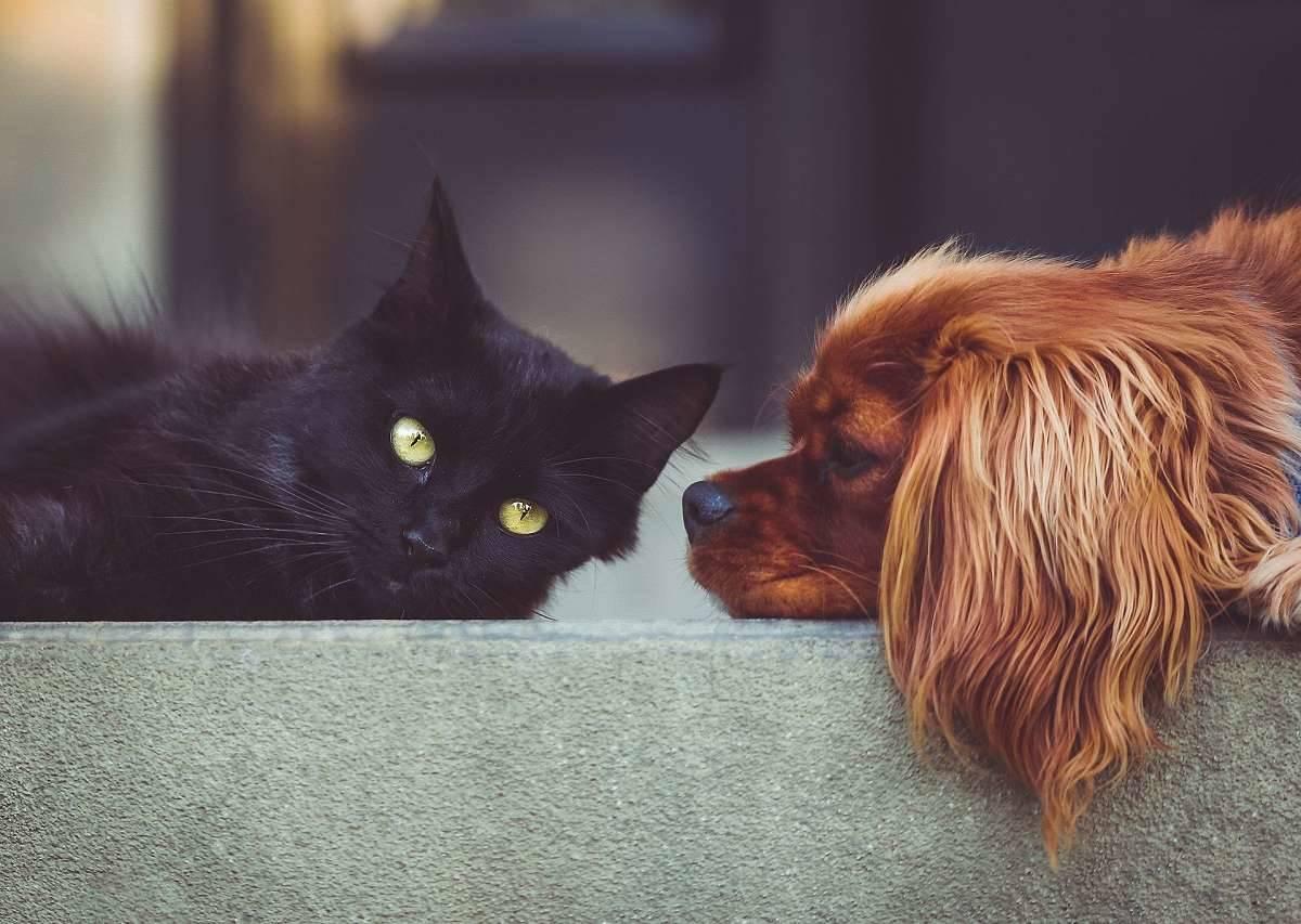 Katze mit Hund