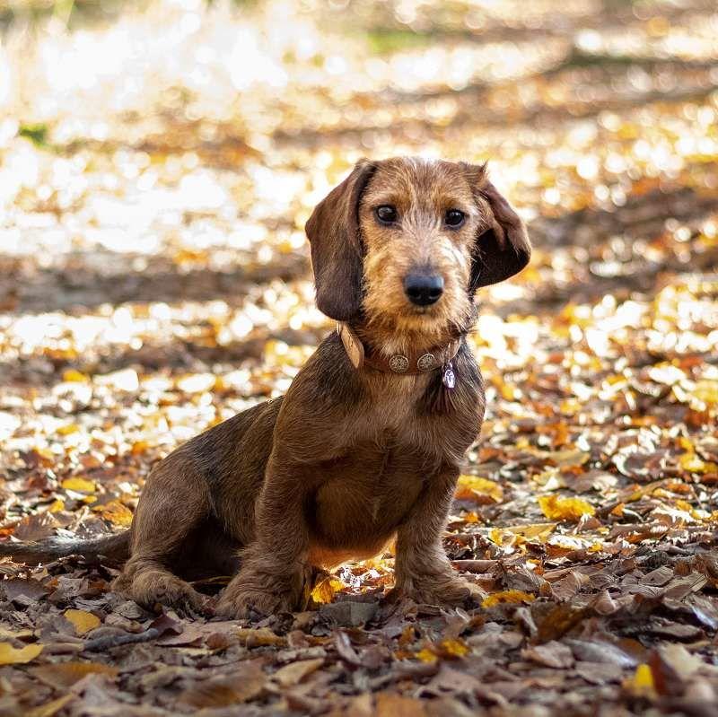 Hund im Wald 2b Q